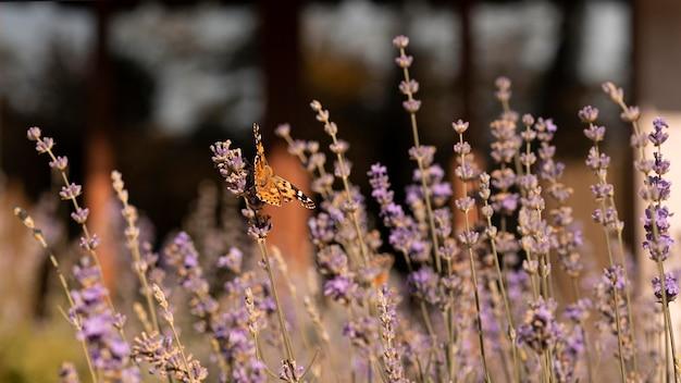 自然の花の美しい蝶