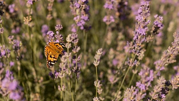 자연 속에서 꽃에 아름 다운 나비