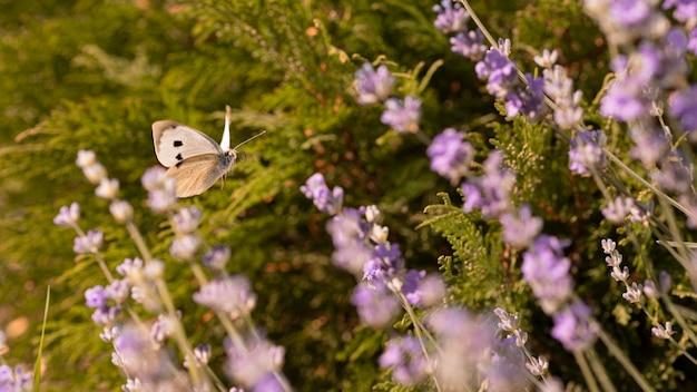 Красивая бабочка на цветке в природе