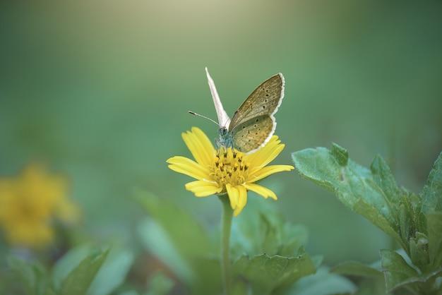 トロピカルガーデンの花に美しい蝶