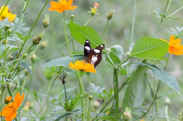 花の植物の美しい蝶