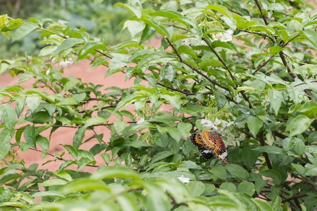 Красивая бабочка на белом цветке размыто или размыто мягкий фокус