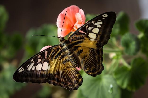 Красивая бабочка, сидящая на зеленых цветочных листьях.
