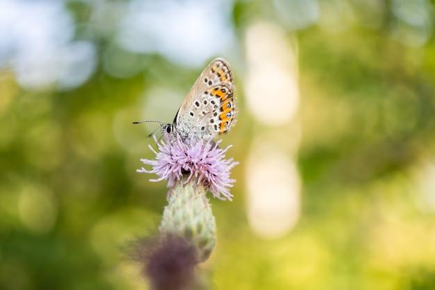 나뭇잎 위에 서 있는 아름다운 나비
