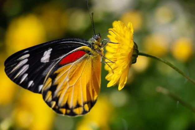 Beautiful butterfly sucking sweet water from yellow flowers