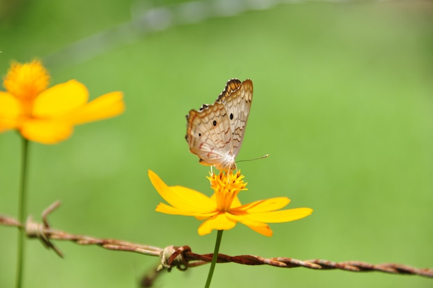 Beautiful butterfly over a yellow flower on a greenfield summer day