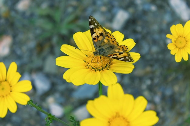 Beautiful butterfly on a yellow flower. selective focus.