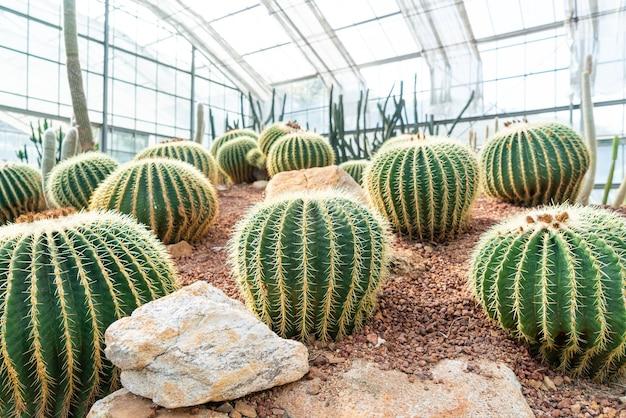Beautiful cactus in garden at queen sirikit botanic garden chiang mai, thailand