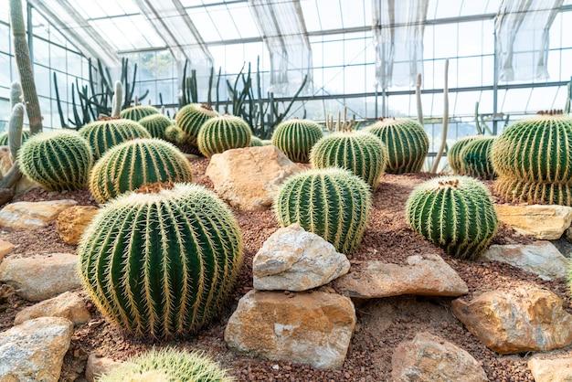 クイーンシリキット植物園チェンマイ、タイの庭の美しいサボテン