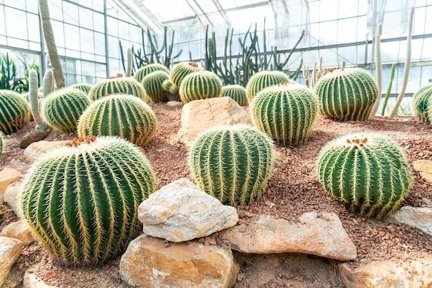 クイーン シリキット植物園チェンマイ、タイの庭の美しいサボテン