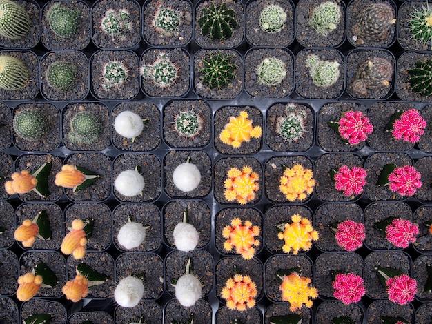 Красивые растения кактуса в горшках.