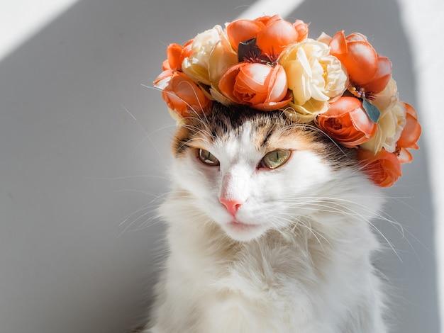 그의 머리에 화 환을 가진 아름 다운 얼룩 고양이. 귀여운 화가 키티 그녀의 머리에 꽃 왕관에 앉아 태양에 앉아 멀리 보인다