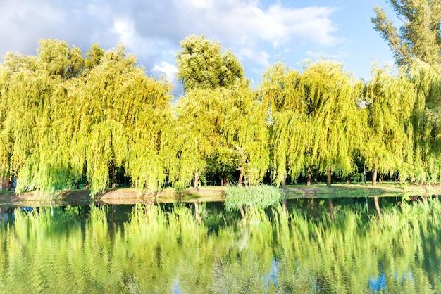 緑の日当たりの良い公園に反射する美しい穏やかな湖