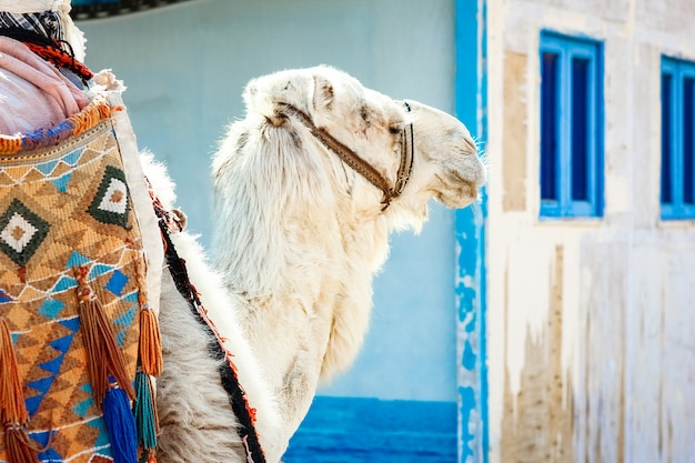 海エジプトの背景の近くの自然の美しいラクダ