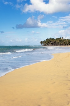 Красивый карибский пляж летом с пальмами