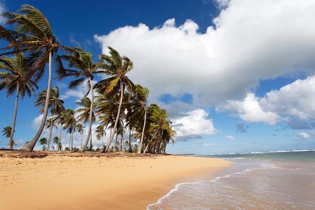 Красивый карибский пляж с пальмами и небом
