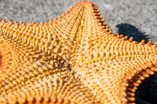 회색 시멘트 배경에 아름다운 카리브해 불가사리 오렌지 색상 화창한 야외, 근접 촬영