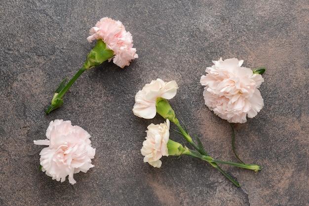 グレーに美しいカーネーションの花