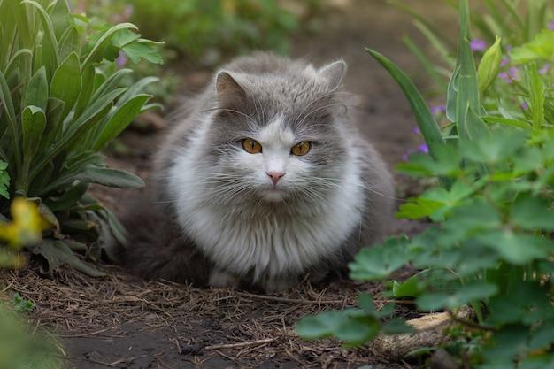 아름다운 고양이와 개화 식물 정원