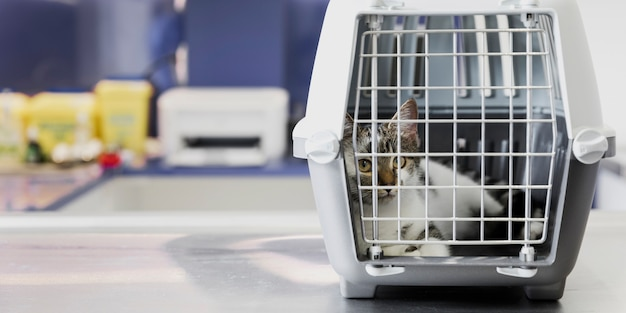 Beautiful cat in cage at veterinary clinic