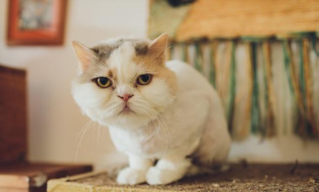 Beautiful cat. grooming animals