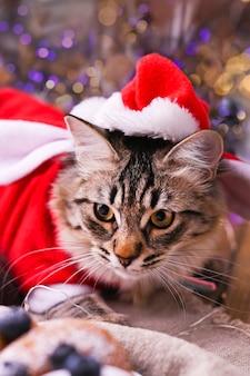 Красивая кошка в одежде санта-клауса.