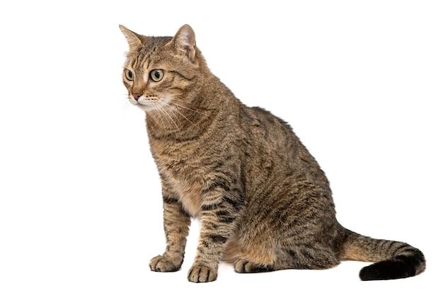 고립 된 아름 다운 고양이입니다.