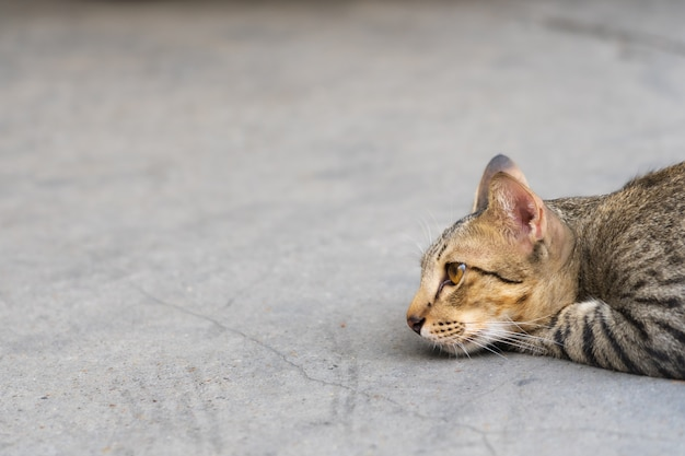 Beautiful cat laying down on the street and looking ahead