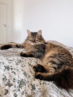 Красивая кошка лежит на кровати в солнечный день