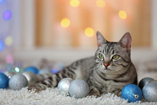 Beautiful cat on light background