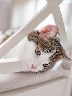 집에서 흰색 의자에 누워 아름다운 고양이, 실내, 재미있는 얼굴 표현