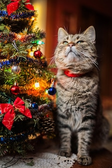 Beautiful cat near the christman tree