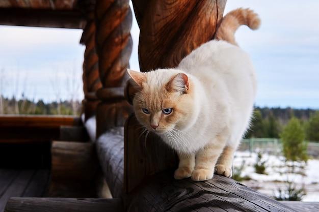 겨울 풍경을 배경으로 마을 집 베란다의 거대한 나무 난간에 있는 아름다운 고양이