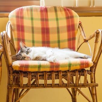 Beautiful cat resting on a elegant wicker chair; daylight.