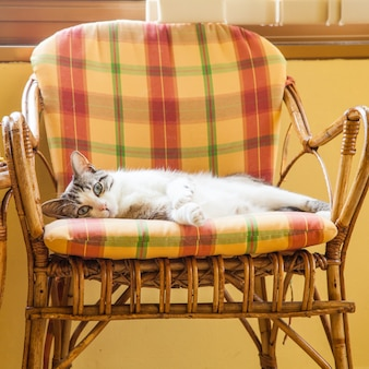 Красивый кот отдыхает на изящном плетеном кресле; дневной свет.