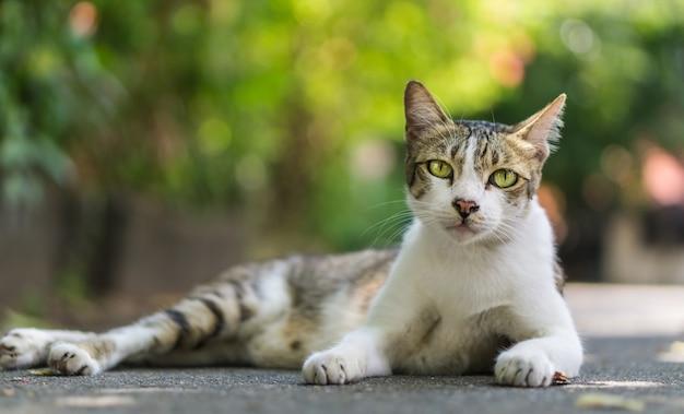 Beautiful cat three colors