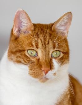 Красивый кот с зелеными глазами