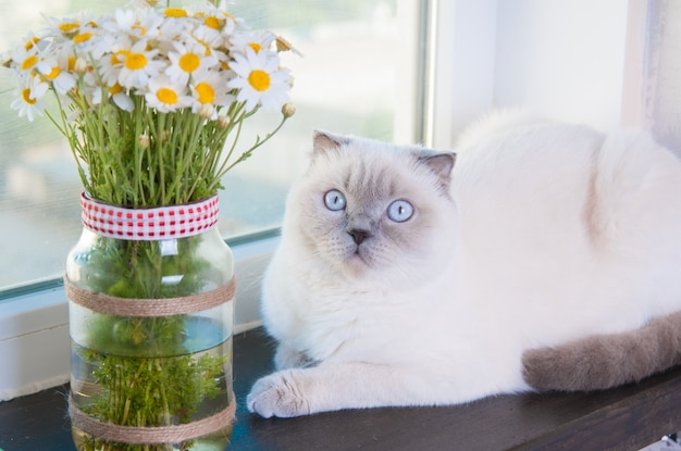 Beautiful chamomile daisy flower bouquet and cat