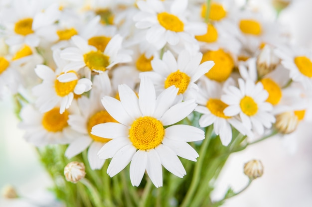 Beautiful chamomile flower bouquet  in a vase