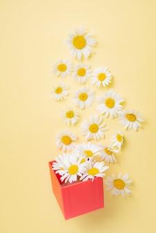 Красивые цветы ромашки вылетают из красной подарочной коробки на желтом фоне. изображение вида сверху