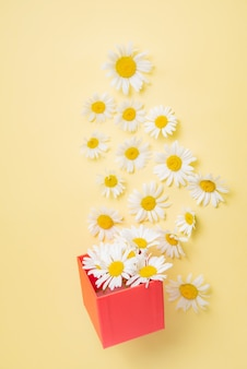 Beautiful chamomile  flowers fly out of a red present box on a yellow background. top view image