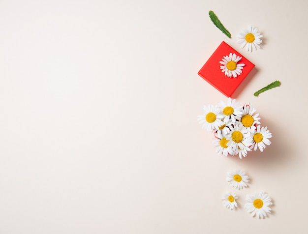 Красивые цветы ромашки в красной подарочной коробке на белом фоне. вид сверху и копирование космического изображения
