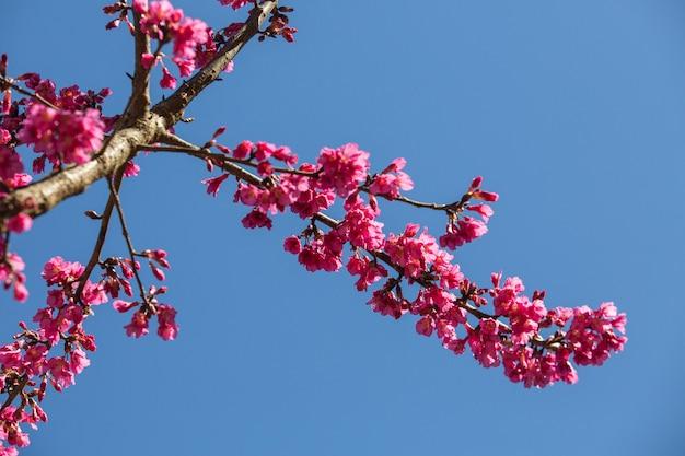 道路脇の美しい桜や桜の木