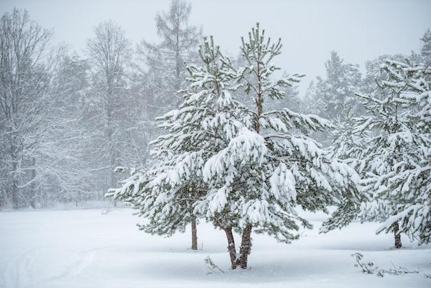 白い自然の背景に美しいクリスマスツリー。雪に覆われた木々や雪の結晶と冬の風景。