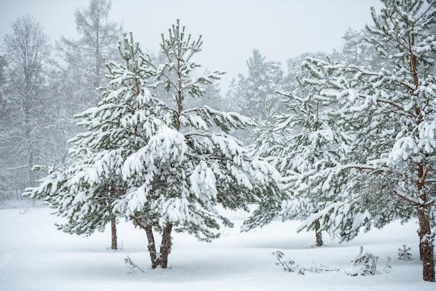 Красивая рождественская елка на фоне белой природы. зимний пейзаж с заснеженными деревьями и снежинками.