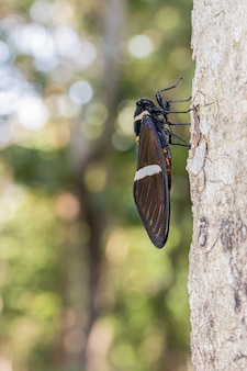 ぼやけた背景と木の上の美しい蝉