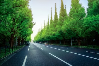 Beautiful city road with trees along side road in Tokyo - Japan.