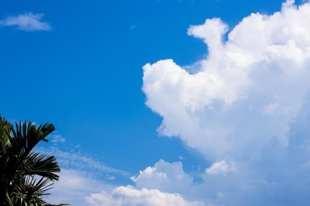 빈랑 나무 위에 흰 구름과 아름다운 깨끗한 푸른 하늘 프리미엄 사진