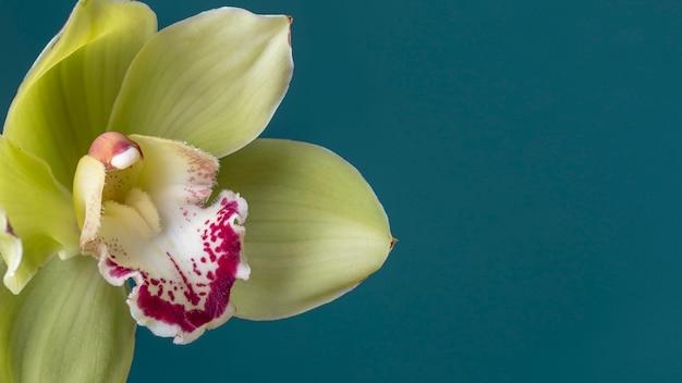 Bellissimo primo piano del fiore sbocciato