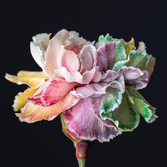 피어 꽃의 아름 다운 클로즈업